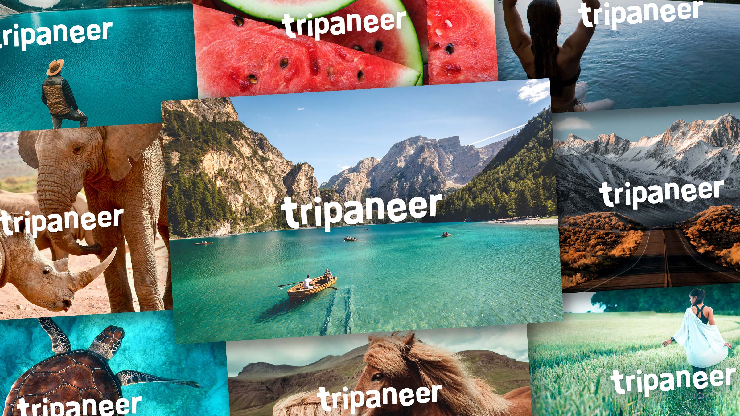 tripaneer11